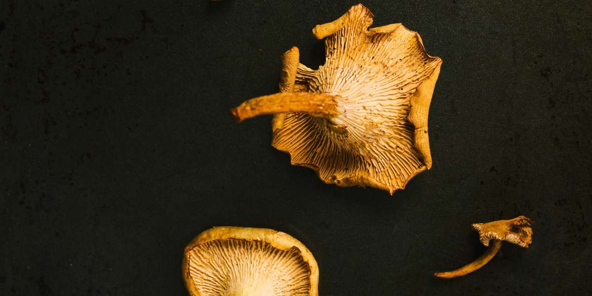 Get the best shrooms now