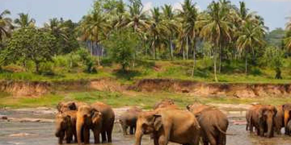 Sri Lanka visa on arrival  Electronic Travel Authorization (ETA) - evisas