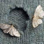 Moth Control Brisbane Profile Picture