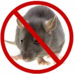 Rodent Control Melbourne Profile Picture